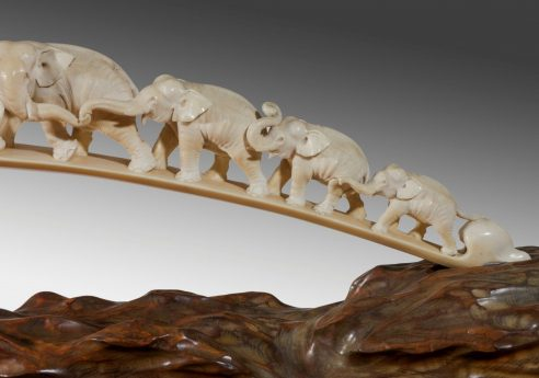 Ivory trade in Australia – a matter of life and death